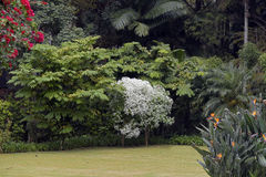 Λεπτομέρεια κήπων με των εγκαταστάσεων και των λουλουδιών που αναστέλλονται την αναρρίχηση Στοκ Εικόνες