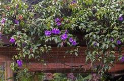 Λεπτομέρεια κήπων με των εγκαταστάσεων και των λουλουδιών που αναστέλλονται την αναρρίχηση Στοκ Φωτογραφία