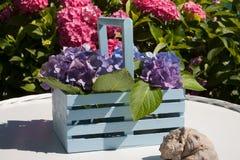 Λεπτομέρεια κήπων Hydrangea Στοκ Εικόνες
