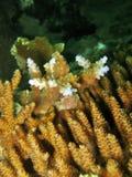 λεπτομέρεια κοραλλιών σκληρή Στοκ Εικόνες