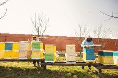 Λεπτομέρεια κυψελών μελισσών Ο μελισσοκόμος εργάζεται με τις μέλισσες και τις κυψέλες στο μελισσουργείο στοκ εικόνες