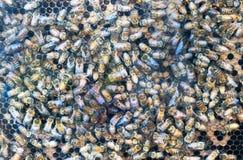 Λεπτομέρεια κυψελών μελισσών στοκ φωτογραφία με δικαίωμα ελεύθερης χρήσης