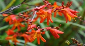 Λεπτομέρεια λουλουδιών στη Νέα Ζηλανδία στοκ φωτογραφία