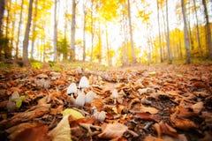 Λεπτομέρεια μανιταριών δασών Στοκ φωτογραφία με δικαίωμα ελεύθερης χρήσης