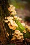 Λεπτομέρεια μανιταριών δασών Στοκ εικόνα με δικαίωμα ελεύθερης χρήσης