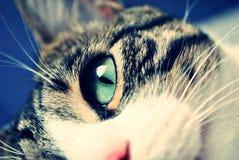 Λεπτομέρεια ματιών γατών Στοκ Φωτογραφία