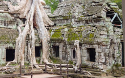 Λεπτομέρεια ναών σε Ankor Thom Στοκ Εικόνα