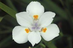 Λεπτομέρεια λουλουδιών Στοκ Φωτογραφίες