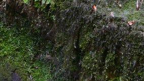 Λεπτομέρεια της βουνοπλαγιάς με τα σταγονίδια νερού που πέφτουν από την υγρασία κίνηση αργή φιλμ μικρού μήκους