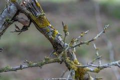 Λεπτομέρεια της σύστασης ενός σπασμένου και ξηρού κλάδου με τις λειχήνες στη μέση του δάσους στοκ εικόνα
