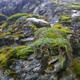 Λεπτομέρεια του απότομου βράχου στη σήραγγα δέντρων Στοκ εικόνες με δικαίωμα ελεύθερης χρήσης