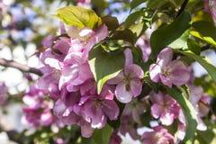 Λεπτομέρεια του ιώδους λουλουδιού Στοκ Φωτογραφία