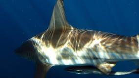 Λεπτομέρεια του καρχαρία Στοκ φωτογραφίες με δικαίωμα ελεύθερης χρήσης