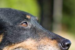 Λεπτομέρεια του κεφαλιού σκυλιών Στοκ εικόνες με δικαίωμα ελεύθερης χρήσης