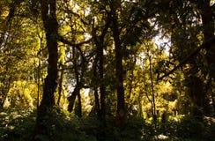 Λεπτομέρεια του κλάδου δέντρων, του κορμού δέντρων και των φύλλων στο πράσινο δάσος στοκ φωτογραφία