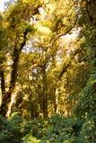 Λεπτομέρεια του κλάδου δέντρων, του κορμού δέντρων και των φύλλων στο πράσινο δάσος στοκ εικόνα