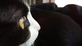 Λεπτομέρεια του ματιού της γάτας μου στοκ εικόνες