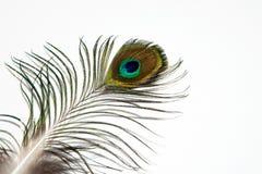 Λεπτομέρεια του ματιού φτερών peacock στο άσπρο υπόβαθρο απομονωμένος στοκ φωτογραφία με δικαίωμα ελεύθερης χρήσης