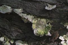 Λεπτομέρεια του μύκητα στο κούτσουρο Στοκ εικόνα με δικαίωμα ελεύθερης χρήσης