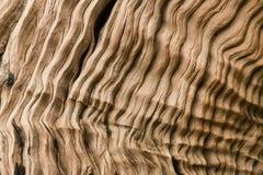 Λεπτομέρεια του ξηρού driftwood Στοκ Εικόνες