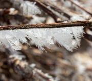 Λεπτομέρεια του παγετού σε έναν κλάδο της αμπέλου 11 Στοκ Φωτογραφία