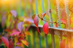 Λεπτομέρεια του φράκτη κήπων με τη ζωηρόχρωμη βλάστηση Στοκ Εικόνα