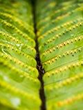 Λεπτομέρεια του φύλλου φτερών Στοκ φωτογραφία με δικαίωμα ελεύθερης χρήσης