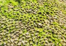 Λεπτομέρεια του Mossy παράκτιου βράχου στοκ φωτογραφίες με δικαίωμα ελεύθερης χρήσης
