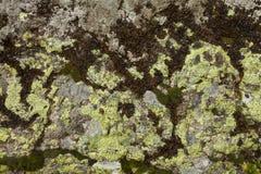 Λεπτομέρεια των λειχήνων και των βρύων πέρα από μια πέτρα βουνών Στοκ φωτογραφία με δικαίωμα ελεύθερης χρήσης