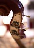 Διπλές πέρκες Στοκ εικόνα με δικαίωμα ελεύθερης χρήσης