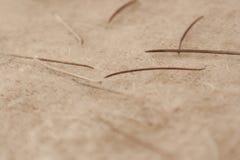Λεπτομέρεια των ξηρών φύλλων πεύκων φθινοπώρου στοκ εικόνες