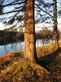 λεπτομέρεια φθινοπώρου Στοκ εικόνα με δικαίωμα ελεύθερης χρήσης