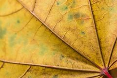 Λεπτομέρεια φύλλων φθινοπώρου στοκ εικόνα