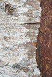 Λεπτομέρεια φλοιών δέντρων με τους σχηματισμούς λειχήνων Κατασκευασμένο backgro φύσης Στοκ φωτογραφία με δικαίωμα ελεύθερης χρήσης