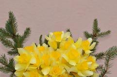 Λεπτομέρεια Daffodils στοκ εικόνες