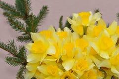 Λεπτομέρεια Daffodils στοκ εικόνα