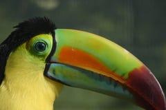 λεπτομέρεια toucan Στοκ φωτογραφία με δικαίωμα ελεύθερης χρήσης