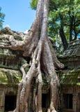 Λεπτομέρεια Wat Angkor Στοκ Εικόνες