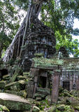Λεπτομέρεια Wat Angkor Στοκ Φωτογραφία