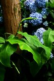 λεπτομέρειες πράσινες στοκ φωτογραφία με δικαίωμα ελεύθερης χρήσης