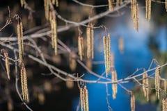 Λεπτομέρειες σπόρων Στοκ εικόνες με δικαίωμα ελεύθερης χρήσης