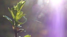 Λεπτομέρειες στη φύση Στοκ Φωτογραφίες