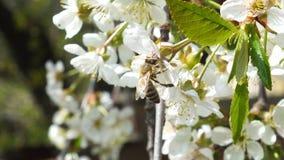 Λεπτομέρειες στη φύση Στοκ φωτογραφίες με δικαίωμα ελεύθερης χρήσης