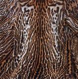 Leopard σύσταση δερμάτων Στοκ Φωτογραφία