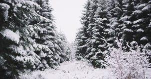 Λεπτομέρειες του καταπληκτικού δάσους με τα μέρη του συνόλου χριστουγεννιάτικων δέντρων καλυμμένος του χιονιού σε μια σκληρή χειμ φιλμ μικρού μήκους
