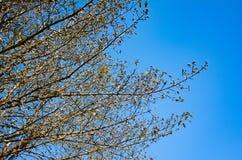 Λεπτομέρειες του κλάδου δέντρων στο μπλε ουρανό στοκ φωτογραφία με δικαίωμα ελεύθερης χρήσης