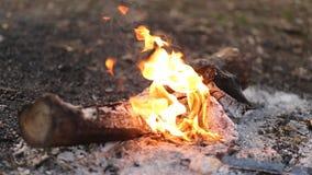 Λεπτομέρειες του ξυλάνθρακα για τη σχάρα, kebab στο πικ-νίκ απόθεμα βίντεο