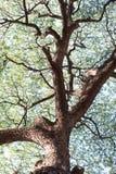 Λεπτομέρειες του πράσινου φυλλώματος δέντρων φύλλων και κλάδων Στοκ εικόνες με δικαίωμα ελεύθερης χρήσης