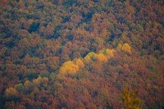 Λεπτομέρειες του φθινοπώρου στο δάσος Στοκ Εικόνα