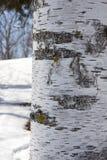Λεπτομέρειες του φλοιού σημύδων Στοκ φωτογραφία με δικαίωμα ελεύθερης χρήσης